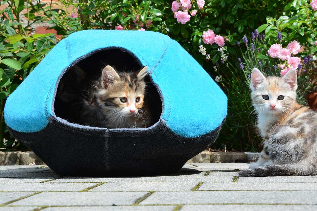 Katze Lazy Place Katzen-Höhle